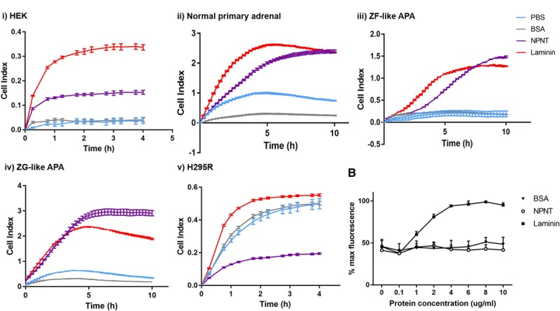 NPNT ( nephronectin ) is proadhesive in normal adrenal and aldosterone-producing adenoma (APA) cells, but antiadhesive in H295R. A , NPNT is proadhesive in ( i ) HEK, ( ii ) normal primary adrenal, ( iii ) zona fasciculata (ZF)–like APA, and ( iv ) zona glomerulosa (ZG)–like APA, but antiadhesive in ( v ) H295R, as demonstrated by wells precoated with PBS, BSA, NPNT, or laminin, and measured by Xcelligence cell impedance as cell index over time (4 h for cell lines, 10 h for primary adrenal cells; n=2 for ZF-like APA and ZG-like APA, n=4 for the rest). B , NPNT is antiadhesive in H295R cells, as confirmed by Hoechst fluorescent stain assay measuring % maximum fluorescence as a representation of number of cells adhered to well with increasing concentrations of BSA, NPNT , and laminin precoating (n=3 for each protein at each concentration). Bars represent mean values per group±SEM.