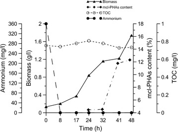 Growth and mcl-PHAs accumulation during 48 h cultivation of P. putida KT2440 relA/spoT mutant in bioreactor