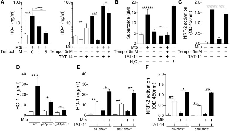 NADPH-derived reactive oxygen species is required for induction of heme oxygenase-1 (HO-1) in macrophages infected with Mycobacterium tuberculosis ( Mtb ) . (A) Human monocyte-derived macrophages were infected with Mtb H37Rv [multiplicity of infection (MOI): 3] in the presence or absence of an antioxidant (Tempol) for 24 h and HO-1 levels were measured in whole cell extracts by ELISA. Right panel shows HO-1 levels in infected macrophages treated with Tempol in the presence of a TAT-conjugated <t>NRF-2</t> sequence peptide that interacts with the <t>Keap-1/NRF-2</t> complex (TAT-14, 50 µM). (B) Generation of superoxide anions was quantified in cell supernatants of cultures shown in panel (A) . H 2 O 2 was used as positive control. (C) Activation of the HO-1 transcription factor NRF-2 in nuclear extracts was quantitatively assessed 12 h after infection using a colorimetric DNA-binding ELISA kit. (D) Bone marrow-differentiated macrophages were prepared from wild type (WT), p47phox −/− , or gp91phox −/− (deficient in two distinct subunits of the NADPH oxidase system) mice and infected in vitro with Mtb (MOI: 3) for 24 h. HO-1 levels were then assessed in whole cell extracts by ELISA. (E,F) HO-1 levels in cell extracts as well as activation of NRF-2 in nuclear extracts were quantified in macrophage cultures in the presence of TAT-14 (50 µM). Data are from at least three experiments using cells from a total of up to six healthy donors. (D–F) Three independent experiments were performed, with samples run in triplicates. Data from different biological groups were analyzed using the Kruskal–Wallis test, with the Dunn's multiple-comparison test, whereas matched analyses were performed using the Wilcoxon matched-pairs test (* p