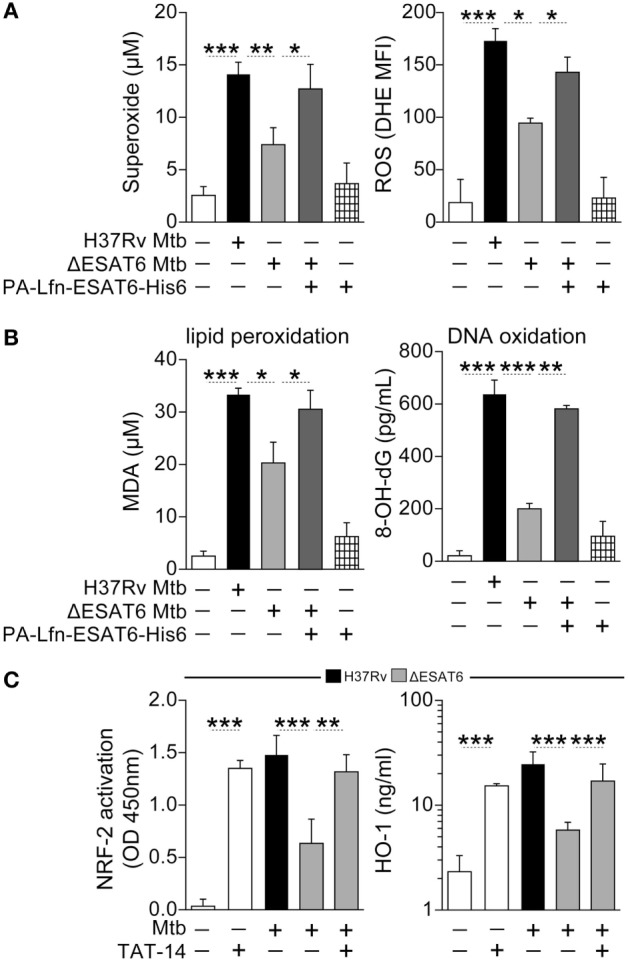 """ESAT6-mediated heme oxygenase-1 (HO-1) induction in Mycobacterium tuberculosis ( Mtb )-infected macrophages is associated with reactive oxygen species (ROS)-dependent release of NRF-2 to the nucleus . (A) Human monocyte-differentiated macrophages were infected with Mtb H37Rv or an H37Rv mutant strain lacking ESAT-6 expression (both at multiplicity of infection: 3) for 24 h. Cells infected with the ESAT-6-deficient Mtb strain were treated with 20 µg/mL of the fusion protein Lfn-ESAT-6 with the anthrax-protective antigen cytosolic delivery system. Generation of superoxide anions was quantified in cell supernatants using a colorimetric assay, while intracellular ROS production was assessed by flow cytometry. Results are plotted as histograms where the mean fluorescence intensity (MFI) was compared between the experimental groups. (B) Lipid peroxidation and oxidative DNA damage were assessed as described in Section """" Materials and Methods ."""" (C) Activation of NRF-2 in nuclear extracts (12 h postinfection) and of HO-1 levels in whole cell lysates (24 h postinfection) were determined in cultures of infected macrophages in the presence or absence of a TAT-conjugated NRF-2 sequence peptide that interacts with the Keap-1/NRF-2 complex (TAT-14, 50 µM). Data are from at least three independent experiments using cells from a total of up to six healthy donors. Data were compared using the Wilcoxon matched-pairs test (* p"""