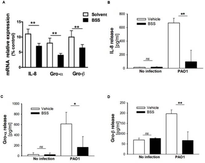 Effect of BSS on expression of neutrophil chemokines in CuFi-1 cells. (A) CuFi-1 cells were treated for 16 h with solvent alone or 100 nM BSS and then infected by PAO1 (10–50 CFU/cell) for 4 h. mRNA expression was measured as indicated in the legend of Figure 2 . (B–D) Release of the neutrophil chemokines IL-8, Groα, and GROβ in the supernatants of CuFi-1 cells were measured by Bio-plex assay. CuFi-1 cells were treated as described for (A) . Representative of at least three experiments performed in duplicate.