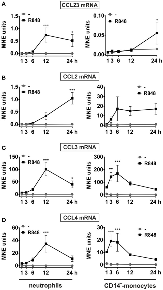 Kinetics of CCL23, CCL2, CCL3, and CCL4 mRNA expression in neutrophils and autologousCD14 + -monocytes incubated with R848 . Neutrophils and autologous CD14 + -monocytes were cultured with or without 5 μM R848 for up to 24 h to evaluate their CCL23 (A) , CCL2 (B) , CCL3 (C) , and CCL4 (D) mRNA expression by RT-qPCR. Gene expression is depicted as mean normalized expression (MNE) units after GAPDH mRNA normalization (mean ± SEM, n = 5). Asterisks stand for significant increase: * P