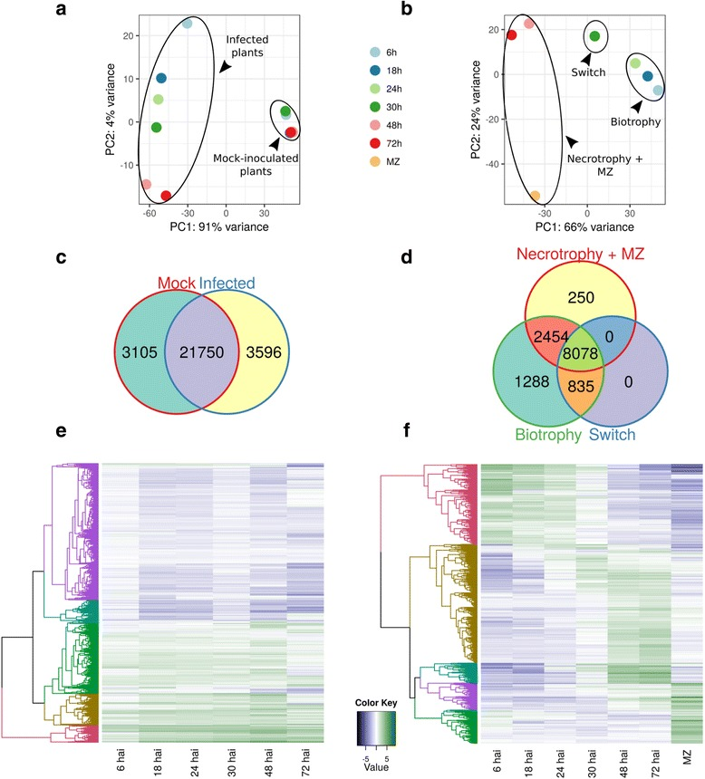 N. benthamiana and P. palmivora transcriptomes show different temporal dynamics during interaction. a , b PCA clustering of full transcriptional profiles of N. benthamiana ( a ) and P. palmivora ( b ). c , d Venn diagrams show shared genes expressed in groups identified by PCA analysis for N. benthamiana ( c ) and P. palmivora ( d ). Genes with transcripts per million ( TPM ) ≥5 were considered to be expressed. e , f Hierarchical clustering of major classes of differentially expressed genes ( p value