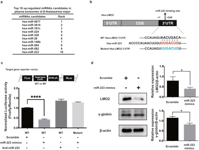 miR-223-3p down regulates LMO2 and γ-globin expression. ( a ) Top10 up-regulated miRNA candidates in the plasma exosomes of β-TM as determined by NGS analysis. ( b ) Predicted miR-223-3p binding site in the 3′UTR of LMO2 with sequence complementarity. ( c ) Schema of a reporter vector (pmirGLO) carrying either WT or mutant 3′UTR of LMO2. Luciferase assays using reporter vector (pmirGLO) carrying either WT or mutant 3′UTR of LMO2 in K562 cells transfected with scramble control microRNA mimics (controls, 100 nM), miR-223-3p mimics (100 nM) or anti-miR-223-3p (antagomir, 100 nM) for 24 hr. Experiments were performed in triplicates. The values represented are mean ± SD, one-way ANOVA, ****P