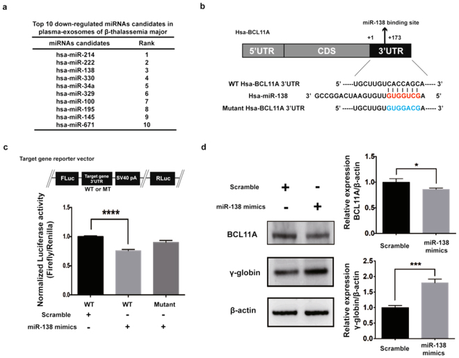 miR-138-5p targets BCL11A and regulates <t>γ-globin</t> expression. ( a ) Top10 down-regulated miRNA candidates in the plasma exosomes of β-TM as determined by NGS analysis. ( b ) Predicted miR-138-5p binding site in the 3′UTR of BCL11A with sequence complementarity. ( c ) Schema of reporter vector (pmirGLO) carrying either WT or mutant 3′UTR of BCL11A. Luciferase assays using a reporter vector (pmirGLO) carrying either WT or mutant 3′UTR of BCL11A in K562 cells transfected with scramble control microRNA mimics (controls, 100 nM), miR-138-5p mimics (100 nM) for 24 hrs. Experiments were performed in triplicates. The values represented are mean ± SD, one-way ANOVA, ****P