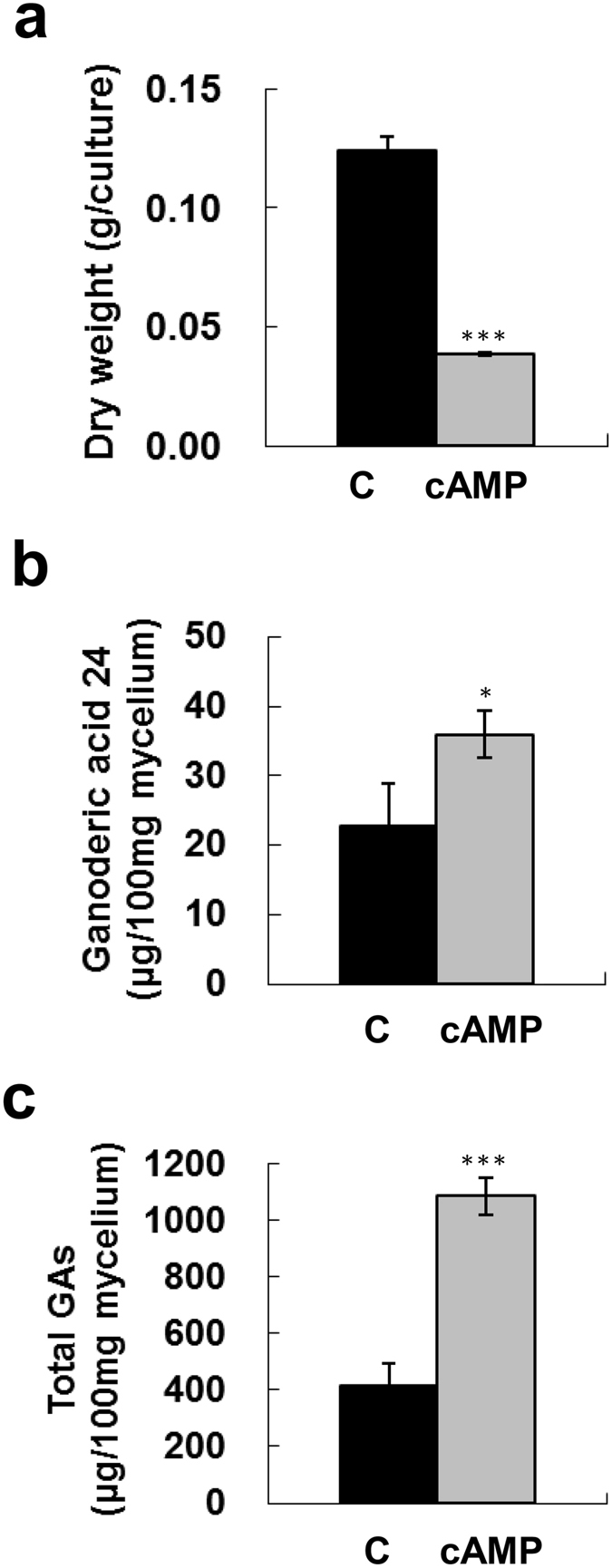 Effect of cAMP and IBMX co-treatment on fungal biomass and production of ganoderic acids. Four-day-old fungal mycelium was cultured on potato dextrose agar (PDA) in 5.5-cm diameter petri dishes and then incubated with 40 mM cAMP and 15 mM IBMX in potato dextrose broth (PDB) for 4 days. Dried mycelium was used to measure fungal biomass ( a ). Lanosta-7,9(11), 24-trien-3α-o1-26-oic acid (ganoderic acid 24) ( b ), and total ganoderic acids (GAs) ( c ) were measured by HPLC. The means of three independent samples with standard deviations are presented. * p