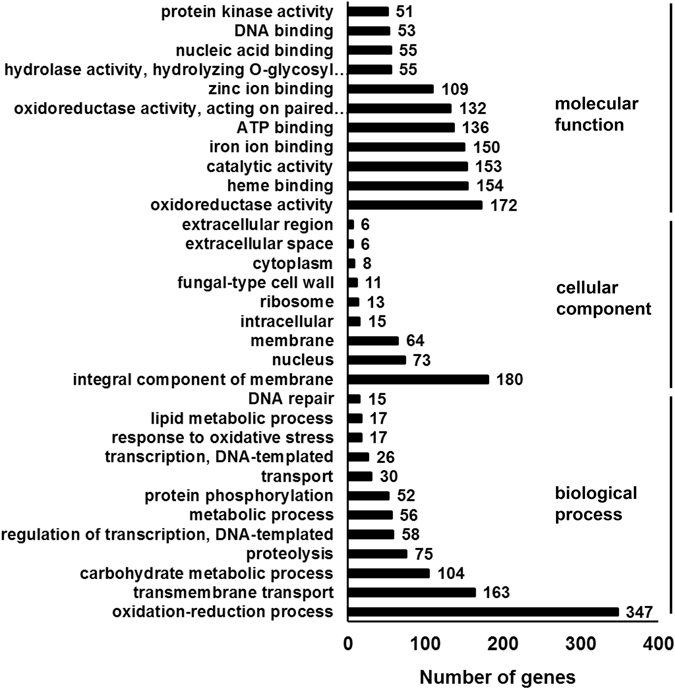 Gene Ontology analysis. The fungal mycelium was incubated with cAMP and IBMX. Transcriptome sequencing was performed to identify differentially expressed genes between the control and cAMP-treated mycelium. The differentially expressed genes were further mapped to the gene ontology (GO) database. Three main categories (biological process, cellular component, and molecular function) are presented.