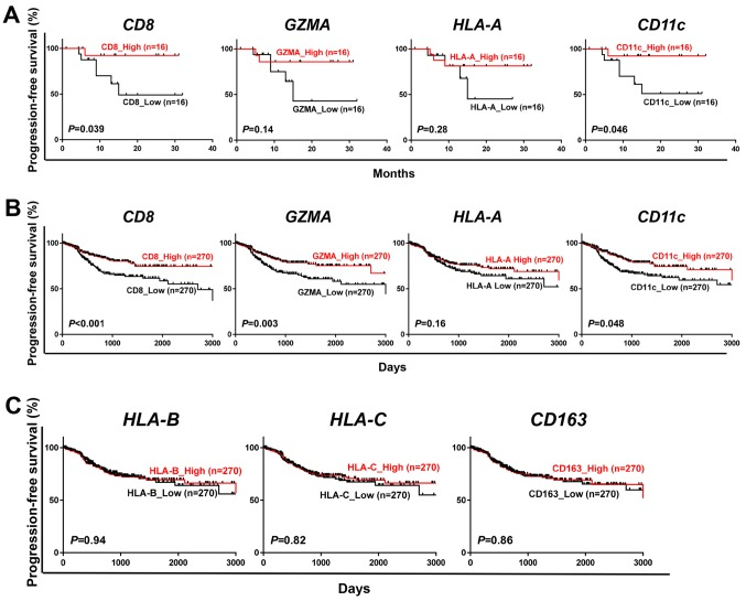 Prognostic significance of cancer immune-related genes in endometrial cancer. (A and B) Kaplan-Meier curves for progression-free survival according to classification of 32 patients by the median expression level of CD8 , GZMA , HLA-A and CD11c gene (A) and to that of 540 cases from the TCGA database (B). (C) Kaplan-Meier curves for progression-free survival by the median expression level of HLA-B , HLA-C and CD163 in 540 cases from the TCGA database. P-values were calculated by a log-rank test.