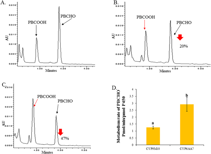 Metabolism profile of PBCHO by CYP6AA7/CPR and CYP9M10/CPR microsomes. ( A ) Control: PBCHO (10 µM) treated with CYP/CPR microsomes (100 pmol P450 in 0.1 M Tris pH = 7.5) for 15 min at 30 °C without NADPH. The black arrows indicate the peaks for PBCHO and PBCOOH; ( B ) PBCHO metabolized by CYP9M10/CPR microsomes. The red arrows indicate the PBCOOH and the reduced amount of PBCHO; ( C ) PBCHO metabolized by CYP6AA7/CPR microsomes. The red arrows indicate the PBCOOH and the reduced amount of PBCHO; ( D ) Metabolism rate of PBCHO with different CYP/CPR microsomes. Statistical significance is represented by P ≤ 0.05, with the letters using one-way ANOVA.