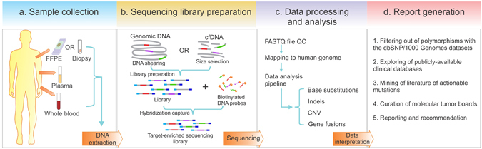Workflow of targeted NGS-based mutation profiling. ( a ) Genomic DNA is extracted from multiple sample types. ( b ) Whole-genome libraries are prepared from fragmented genomic DNA or cfDNA, followed by hybridization capture with biotinylated DNA probes to establish target-enriched sequencing libraries for NGS. ( c ) Sequencing data undergoes quality control (QC), mapping and bioinformatic analysis to identify different classes of genomic aberrations. ( d ) Mutations identified are filtered and annotated according to related databases, and their clinical significances are interpreted in the final report.