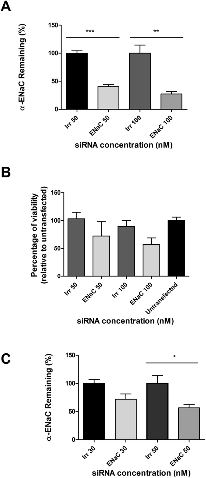Primary CF epithelial cells with LPRs containing either 50 nM or 100 nM siRNA and peptide Y. ( A ) Percentage of expression of the α-ENaC mRNA after siRNA treatment in primary CF cells in submerged culture. The expression of α-ENaC was 40.5% at 50 nM and 27.2% at 100 nM, respectively. The difference was statistically significant (*** P ≤ 0.001) at 50 nM, whereas the significance (**P ≤ 0.01), was lower at 100 nM. The results show the means ± S.E.M. of triplicate experiments. ( B ) Viability (percentage) of primary CF cells following transfections with LPRs formulated with peptide Y compared to untransfected cells. The α-ENaC-siRNA treated cells showed a viability of 72% at 50 nM siRNA concentration and 57% at 100 nM. Cell survival was assessed using an LDH assay measuring the light emitted at 610 nm. Results represent mean values of triplicate repeats ± S.E.M. ( C ) Percentage of remaining expression of the α-ENaC gene transcript in primary CFBE cells grown on ALI in <t>transwell</t> plates. The expression of the transcript of the α-ENaC gene was 71.8% at 30 nM and 56.7% at 50 nM. The difference was statistically significant only at 50 nM (*P ≤ 0.05). qRT-PCR analysis was performed in triplicate on individual samples. The mRNA levels of the α-ENaC gene are expressed as percentage of irrelevant/non-targeted control siRNA.