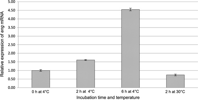Relative expression of eng mRNA in P. pastoris CL2 in response to cold-shock at 4 °C. CL2 cells were grown in medium BMGH (30 °C for 4 h), from OD 600 = 1 inoculum, then subjected to cold-shock for the induction of eng mRNA transcript expression (4 °C for 6 h). Samples were taken at 0, 2 and 6 h for analysis by <t>qRT-PCR;</t> and finally, they were transferred to 30 °C for 4 h for ENG product synthesis, stage in which the corresponding sample at 2 h was taken for analysis by qRT-PCR. The values of relative expression of eng mRNA were calculated in relation to eng and the housekeeping constitutive gene act1 (control) expression using method 2 −ΔΔCt