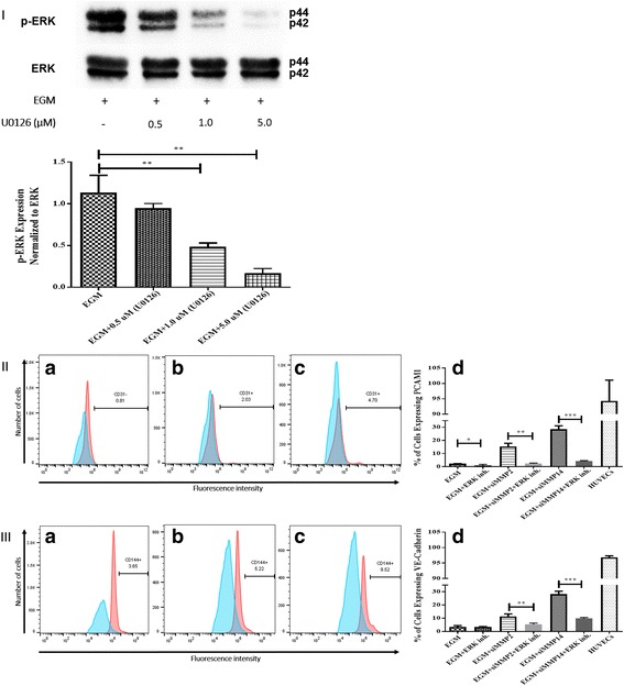 Inhibition of ERK phosphorylation and immunophenotyping for EC markers. I Concentration -dependent effect of ERK inhibitor (U0126). Three different concentrations (0.5, 1.0, and 5.0 μM) of U0126 were used. Western blot analysis showed significant inhibition of p-ERK by 1.0 and 5.0 μM of U0126. However, 5.0 μM of U0126 showed the highest inhibition among all three different concentrations. Phospho-ERK was normalized to its total protein expression. II Flow cytometric analysis of PECAM1 (CD31) with ERK inhibitor (U0126). Three different groups treated with 5.0 μM of U0126: AMSCs with EGM ( A ), AMSCs with EGM and MMP-2 siRNA ( B ), and AMSCs with EGM and MMP-14 siRNA ( C ). Flow cytometry data were analyzed to show the significant differences between the groups ( D ). III Flow cytometric analysis of VE-cadherin (CD144) with ERK inhibitor (U0126). Three different groups were treated with 5.0 μM of U0126: AMSCs with EGM ( A ), AMSCs with EGM and MMP-2 siRNA ( B ), and AMSCs with EGM and MMP-14 siRNA ( C ). Flow cytometry data were analyzed to show the significant differences with or without U0126 ( D ). * p