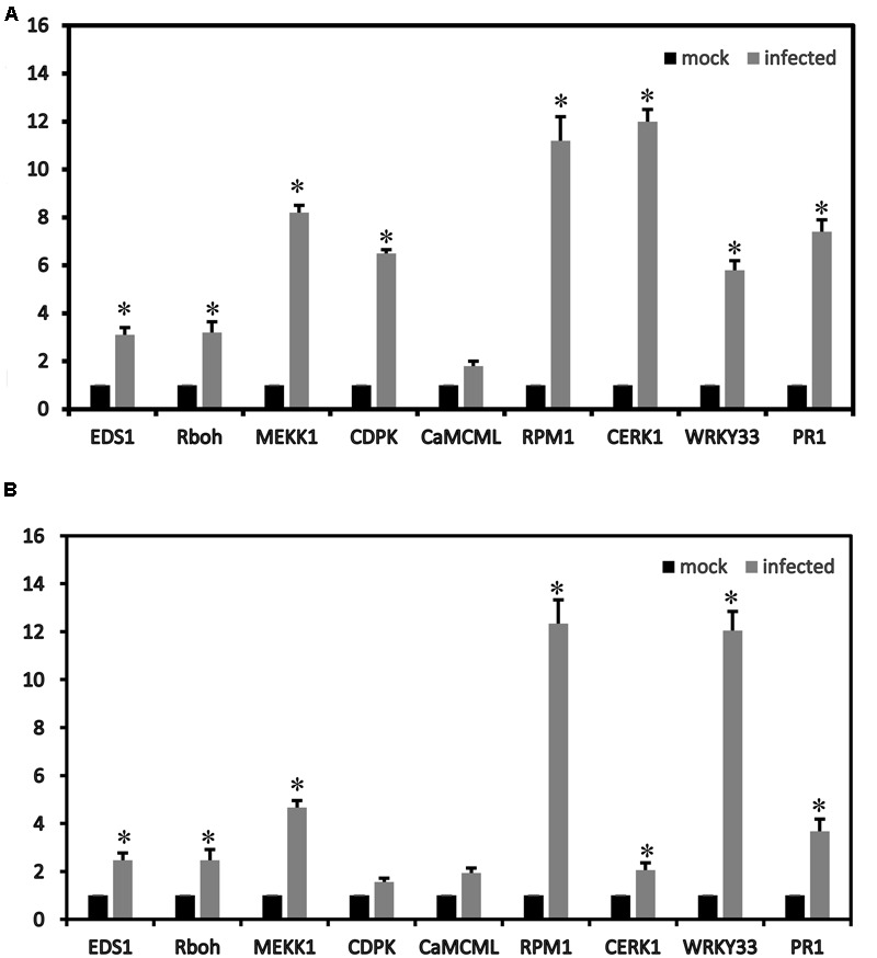 Relative expression values according to the qRT-PCR analysis of the up-regulated strawberry genes in the plant–pathogen interaction pathways between mock and infected leaves at 72 h of 'Yanli' (A) and 'Benihoppe' (B) . The qPCR results were generally in accordance with the gene expression profiles in the transcriptome data. ∗ p