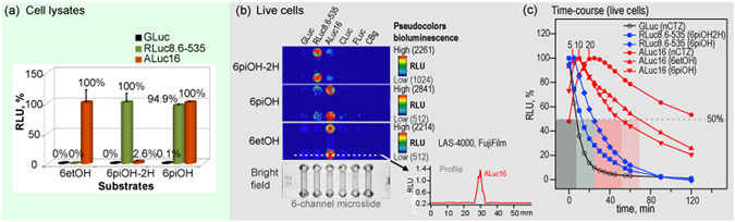Biased selectivity of the synthetic luciferins to marine luciferases. ( a ) The relative selectivity of representative synthetic luciferins according to luciferases in cell lysates. ( b ) The corresponding live-cell images on a 6-channel microslide, demonstrating the relative luciferase-selectivity of the selected coelenterazine (CTZ) analogues in living mammalian cells. The optical intensity ranges of 6piOH-2H-CTZ, 6etOH-CTZ, and 6piOH-CTZ were 1024–2261, 512–2214, 512–2841 RLU, respectively. ( c ) The time course of the optical intensities after substrate injection to the microslide channels growing live cells. The bioluminescence exhibited clearly distinctive time courses according to the chemical structures of the synthetic luciferins and the kinds of marine luciferases. The blue- and red-marked lines indicate the intensity profiles of RLuc8.6-535 and ALuc16 by time, respectively. Greatly enhancing features in the optical intensity by time were observed with ALuc16. Abbreviations: GLuc, Gaussia princeps luciferase; RLuc8.6-535, Renilla reniformis luciferase 8.6-535; ALuc16, artificial luciferase 16; CLuc, Cypridina luciferase; FLuc, firefly luciferase; CBgreen, click beetle luciferase green.