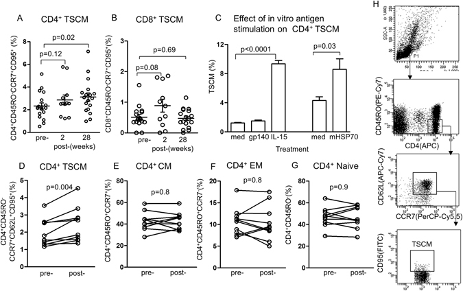 Identification of TSCM CD45RO − CCR7 + CD95 + CD4 + and CD8 + T cells. ( A ) CD4 + TSCM and ( B ) CD8 + TSCM cells pre- immunization, 2 and 28 weeks after the last immunization (n = 12–18), all from different immunized subjects. ( C ) The specificity of TSCM was examined by in vitro stimulation with HIVgp140 and compared with recombinant IL-15 and microbial (m) HSP70. ( D ) Shows significant increase in CD4 + TSCM 28 weeks after the last immunization in the vaccinated cohort, but not in the CCR7 + central (CM), CCR7- effector memory (EM) or naïve CD4 + T cells (n = 10 in each group, ( E , F , G ). ( H ) Identification of TSCM and gating.