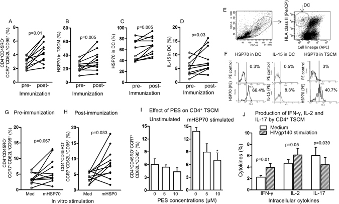 The effect of vaccination on inducible HSP70 in CD4 + TSCM and DC before and 28 weeks after immunization. ( A ) CD4 + TSCM, ( B ) HSP70 in CD4 + TSCM, ( C ) HSP70 in DC, ( D ) membrane associated (ma)IL-15 in DC. ( A–D ) Assays were performed on cells from the same vaccinees (n = 11). ( E ) Gating strategy used to identify DC. ( F ) Flow cytometry identifying HSP70 and IL-15 in DC, and HSP70 in TSCM. ( G ) The effect of stimulating CD4 + TSCM with microbial (m) HSP70 before and ( H ) after immunization. ( I ) The effect of dose dependent inhibition of HSP70 with PES in unstimulated and microbial (m)HSP70 stimulated CD4 + TSCM; *p value = 0.02, when compared with the untreated (0) µM of cells. ( J ) The effect of stimulating CD4 + TSCM with HIVgp140, compared with unstimulated cells on IFN-γ, IL-2 and IL-17 (n = 10 samples from different subjects).