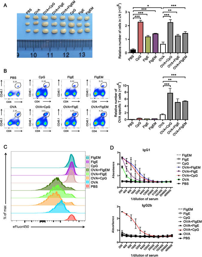 Adjuvanticity of FlgE to Soluble Antigen in Mice. ( A–C ) Naïve OVA-specific T cells were purified from the spleens and inguinal lymph nodes of CD45.1 × OTII F1 mice by sorting using various antibodies to surface markers, labeled with eFluor450 and transferred into female C57BL/6 mice at 1 × 10 6 cells/mouse via tail vein injection. Twenty-four hours later, the recipients were treated or immunized via subcutaneous injection at the base of the tail with one of eight compositions, namely 1 μg OVA, 50 μg CpG-1826, 50 μg FlgE, 50 μg FlgEM each alone, or OVA plus the three stimulants individually. Control groups received 100 μL PBS. Three days later, the mice were sacrificed, and the draining inguinal lymph nodes were isolated and photographed ( A ). Single-cell suspension were made for staining with CD45.1 plus CD4 and then run on a BD <t>FACSAria</t> II and analyzed for eFluor450 intensity to quantify the proliferation of OVA-specific T cells ( B,C ). ( D ) To measure the humoral response, WT C57BL/6 mice were immunized with above 8 compositions except for increasing OVA doses to 100 μg. Two weeks later, the mice were sacrificed for serum harvest, and anti-OVA titers were measured using an ELISA as described in Materials and Methods. Data are representatives of two independent experiments that showed similar results. n = 3 mice for panel A–C, and n = 4 mice for panel D. *P