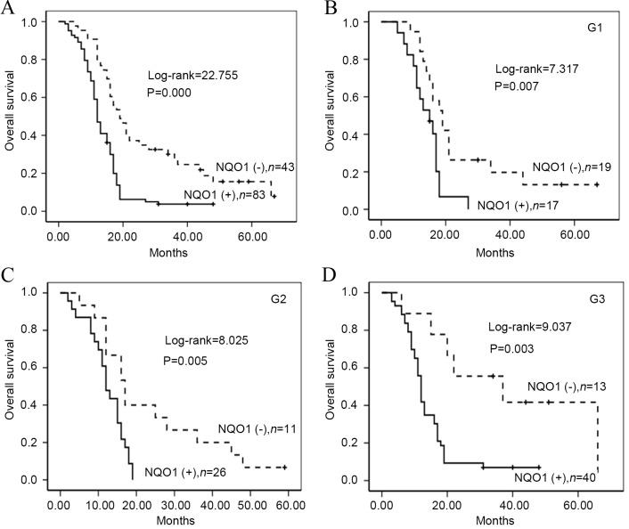Kaplan-Meier survival curves illustrating the significance of NQO1 expression in PDAC patients with different grading. (A) OS rates of patients with high (solid; n=83) and low (dashed; n=43) NQO1 expression (P