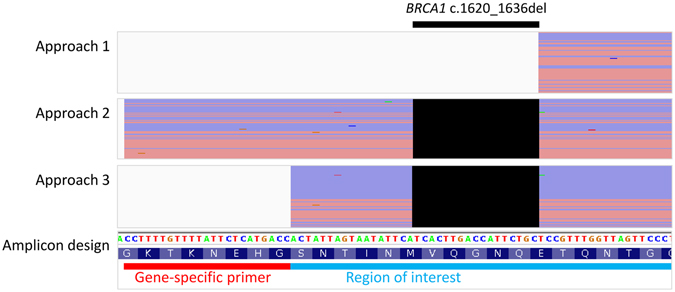 A BRCA1 deletion escaped from variant calling when primers were trimmed before mapping. NGS read alignments of BRCA1 c.1620_1636del allele from three primer handling approaches are shown in conjunction with the amplicon design and reference genome sequence. Individual forward and reverse sequencing reads after any soft-clipping were represented by red and purple horizontal lines, respectively. The expected deletion event (black box) was present in the alignments from approaches 2 and 3 only.