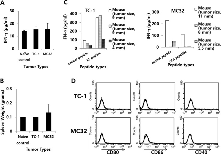IFN-γ and the expression level of co-stimulatory molecules in TC-1 and MC32 tumor models ( A ) Each group of C57BL/6 mice ( n = 3/group) was challenged s.c. with TC-1 and MC32 cells (5 × 10 5 cells/mouse). When tumor sizes reached 7–8 mm in mean diameter (9, 9 and 4 mm for TC-1 tumor; 11, 8 and 5,5 mm for MC32 tumor), the mice were bled and sera were collected to measure systemic IFN-γ levels using ELISA. ( B ) The mice were sacrificed to measure their spleen weights. ( C ) The splenocytes were isolated and reacted for 2 days with class I CTL peptides (control CEA vs. E7 peptides for TC-1 tumor; control E7 vs. CEA peptides for MC32 tumor). The collected cell supernatants were used to measure IFN-γ levels using ELISA. ( D ) Five × 10 5 TC-1 and MC32 tumor cells were treated with PE-labeled <t>anti-CD80,</t> anti-CD86 and anti-CD40 (thick line), as well as control Abs (thin line) to measure the expression of CD80, CD86 and CD40 molecules using a flow cytometer. The values and bars show IFN-γ levels or spleen weights, and SDs, respectively.