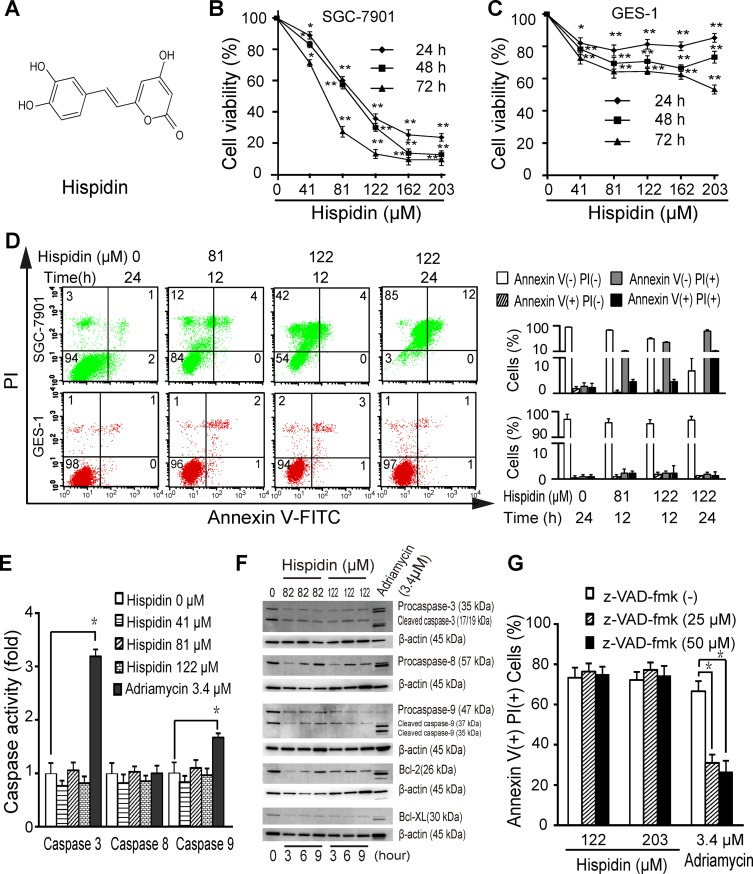 Hispidin induces caspase-independent cell death in SGC-7901 cells ( A ) Chemical structure of hispidin. Cells were incubated with hispidin (41, 82 or 122 μM) or 0.1% DMSO for 12, 24, 48 or 72 h. The viability of SGC-7901 ( B ) and GES-1 ( C ) cells was determined using the MTT assay. ( D ) Cells were incubated with hispidin or 0.1% DMSO and then were assayed for phosphatidyl serine externalization and PI permeability. ( E ) SGC-7901 cells were treated with 41, 81, or 122 μM hispidin; 0.1% DMSO; or 3.4 μM Adriamycin for 6 h. Then, caspase activity was examined. ( F ) SGC-7901 cells were treated with hispidin or Adriamycin. Then, caspase-3, caspase-8 and caspase-9 were detected by Western blotting using β-actin as an internal control. ( G ) SGC-7901 cells were preincubated in the presence or absence of 25 or 50 μM z-VAD-FMK for 2 h before being treated with 122 μM hispidin. Then, the cells were examined for PI permeability.