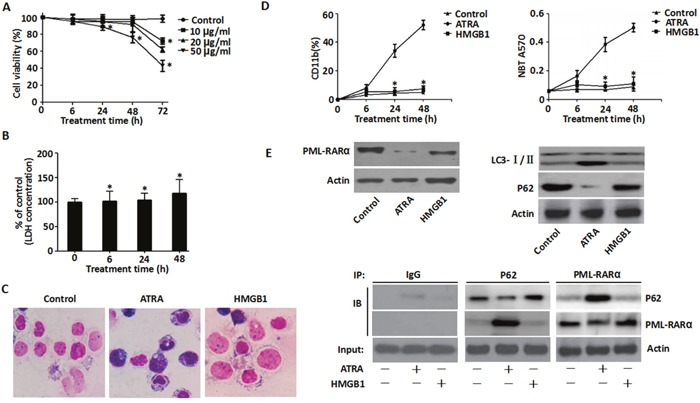 Effects of exogenous HMGB1 on ATRA-induced differentiation A . Viability of NB4 cells that were treated with exogenous HMGB1 (10, 20 50 μg/ml) for 6-72 h was determined by the CCK-8 assay. Viability of control cells (DMSO) was set as 100%. (n=3, * P