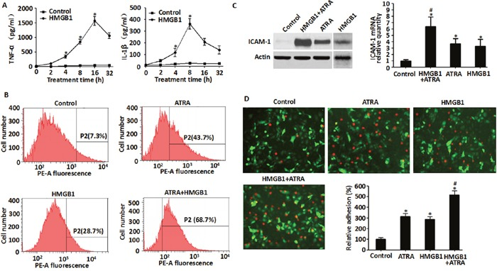 Exogenous HMGB1 induced cytokine secretion, up-regulated expression of ICAM-1 and enhanced endothelial adhesion in NB4 cells A . Levels of TNF-α and IL-1β secreted by NB4 cells that were treated with HMGB1 (10 μg/ml) for 2-32 h were detected by ELISA. (n=3, * P