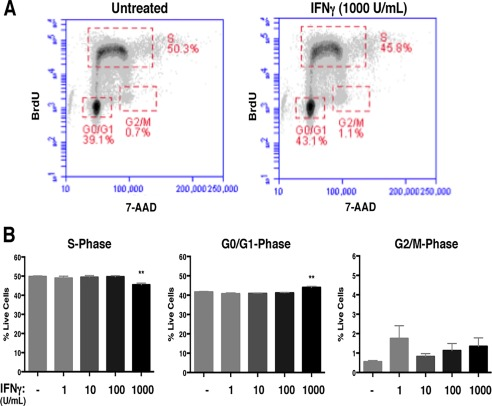 IFNγ‐mediated regulation of cell cycle progression is STAT1‐dependent in NSPCs. A: STAT1‐KO NSPCs were treated with IFNγ (1, 100, 1000 U/ml) for 72h and labeled with BrdU and 7‐AAD. The BrdU and 7‐AAD intensities per cell were assayed by flow cytometry. Cell populations were gated in different phases of cell cycle (S = synthesis phase, G1 = gap phase 1, M = mitosis phase, G2 = gap phase 2). Representative plots for untreated and IFNγ‐treated NSPCs (1000 U/ml) are shown. B: Quantitation of NSPCs in each cell cycle phase. The average percentage of cells in each cell cycle phase was plotted with SEM (n = 3). Statistical analysis was applied using one‐way ANOVA (**p