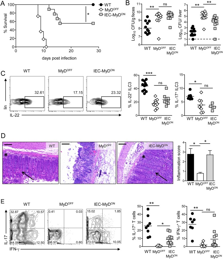 MyD88-dependent signaling in IEC contributes to host resistance to infection. (A) Survival of WT, MyD OFF and IEC-MyD ON mice following infection with C . rodentium . (B) Bacterial load in the feces and the liver on day 8 p.i. (C) ILC3 response on day 4 p.i. with C . rodentium . Cells were isolated from the cLP and analyzed by flow cytometry. Representative plots showing the frequency of IL-22 + cells within live ILC3. Graphs represent frequency (%) of IL-22 + and IL-17A + cells amongst live ILC3. (D) Representative H E colon sections on day 8 p.i. with C . rodentium . Black asterisks indicate inflammatory infiltration into to the cLP; black arrow heads indicate crypt elongation. Scale represents 100 μm. Bar graph represents inflammation score based on infiltration and epithelial hyperplasia. (E) Colonic T cell response on day 8 p.i. Representative flow cytometry plots of live CD3 + CD4 + T isolated from the cLP and stained for IL-17A and IFN-γ. Dot plots represent frequency (%) of colonic IL-17A + (IFN-γ +/− ) and IFN-γ + (IL-17 +/− ) cells amongst live CD3 + CD4 + T cells. Data were pooled from two individual experiments with a total of n = 11 mice per group (A) or pooled from two (D) or three (B, C, E) independent experiments with n = 2–5 mice per group. Horizontal bar represents mean. Error bar represents +SEM. Dashed line indicates the limit of detection. Log-rank test (A) and One-Way ANOVA with Bonferroni's Multiple Comparison test (B-E); *p