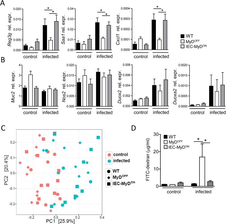<t>IEC</t> intrinsic MyD88 signaling promotes barrier function of the epithelium. (A, B) Gene expression in IEC isolated before (control) or on day 4 p.i. (infected) with C . rodentium from the colon of WT, MyD OFF and IEC-MyD ON mice. Data shown as mean relative expression to Actb . (C) Principal component analysis of the intestinal microbiota in individual mice before (control) or on day 4 p.i. (infected) with C . rodentium . (D) Intestinal permeability in WT, MyD OFF and IEC-MyD ON mice before (control) or on day 8 p.i. (infected) with C . rodentium . FITC-dextran serum levels were determined 4 h after oral administration of this compound. Data were pooled from two (C), <t>three</t> (D) or four (A, B) independent experiments with n = 3–5 mice per group. Error bar represents +SEM. One-Way ANOVA with Bonferroni's Multiple Comparison test (A, B, D); *p