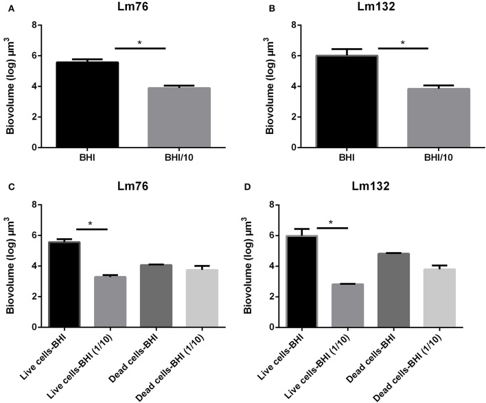 Biovolume calculation of biofilm formed in static conditions by Listeria monocytogenes Lm76 and Lm132 strains grown in a rich medium BHI and poor medium BHI/10 for 24 h at 30°C; (A,B) Total biovolume of biofilm formation by Lm76 and Lm132 strains respectively which corresponds to some of the live and dead biomass in each biofilm; (C,D) Biovolume of live (green cells) and dead (red cells) biomasses in Lm76 and Lm132 biofilm respectively. * P