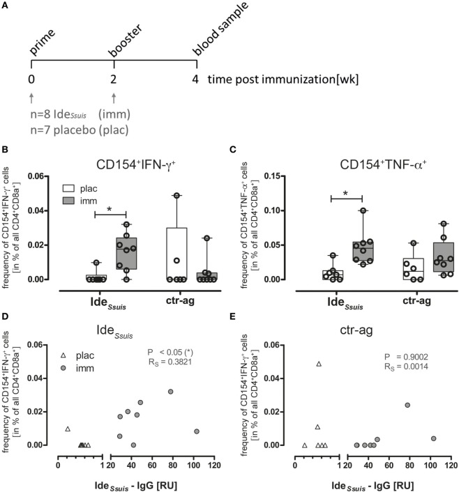 Ide Ssuis -reactive Th cells are increased in PBMCs of immunized piglets identified by CD154 expression and cytokine production and the frequency of CD154 + IFN-γ + Th cells correlates with Ide Ssuis -specific IgG . (A) Piglets were primed with rIde Ssuis followed by booster immunization 2 weeks later. Blood samples for the investigation of antigen-specific Th cells were taken 2 week post-booster immunization. (B,C) To detect antigen-reactive Th cells, PBMCs derived from rIde Ssuis -immunized (imm; n = 8) or placebo-treated (plac; n = 7) piglets were ex vivo restimulated for 18 h with 5 µg/ml rIde Ssuis or ctr-antigen (rSfb I), respectively, in presence of Brefeldin A (2 µg/ml) for the last 4 h. The frequency of antigen-specific Th cells was calculated as the difference of specified cells from antigen-restimulated and medium-cultivated PBMC, respectively. Statistical analysis was performed with Kruskal–Wallis test (** p = 0.0063) and Dunn's multiple comparison test (* p ≤ 0.05). Ide Ssuis specific-IgGs were measured by ELISA with serum from the same piglets before and after immunization, using an independent Ide Ssuis -IgG positive reference serum. The correlation between Ide Ssuis -IgG and frequency of Ide Ssuis induced CD154 + IFN-γ + Th cells (D) or frequency of ctr-ag induced CD154 + IFN-γ + (E) was estimated by Pearson correlation (* p ≤ 0.05).