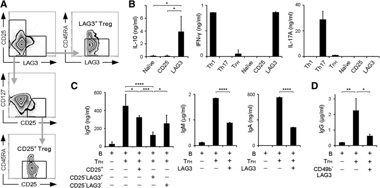 Human CD4 + CD25 − LAG3 + T cells suppressed antibody production. a Gating strategy of fluorescence-activated cell sorting analysis for CD4 + CD25 − LAG3 + CD45RA − T cells (LAG3 + Tregs) and CD4 + CD25 + CD127 dim CD45RA − T cells (CD25 + Tregs). b IL-10, IFN-γ, and IL-17A protein levels in the culture supernatants after 3 days of incubation of the indicated T-cell subsets was determined by ELISA ( n = 6). c B cells and T FH cells were cocultured with the indicated subsets for 12 days in the presence of SEB stimulation, and total IgG, IgM, and IgA production was determined by ELISA ( n = 6). d B cells and T FH cells were cocultured with CD4 + CD25 − LAG3 + CD49b − T cells for 12 days in the presence of SEB stimulation, and total IgG was determined by ELISA ( n = 3). All error bars represent SD. * P