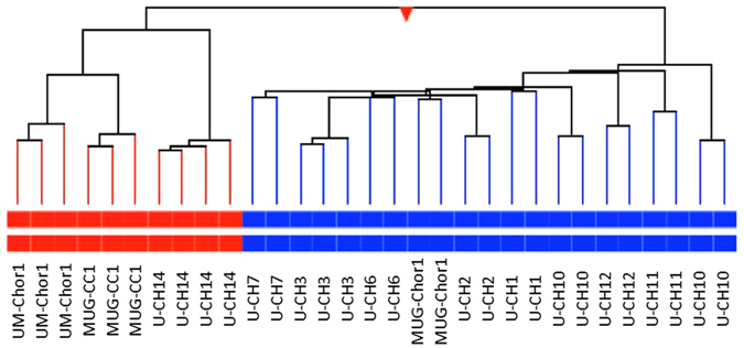 Hierarchical cluster analysis of nine sacral (blue) and three clivus (red) chordoma cell lines. The gene expression was tested using the 4 × 44 K whole genome microarray (Agilent Technologies). Each cell line was tested at least in duplicates.
