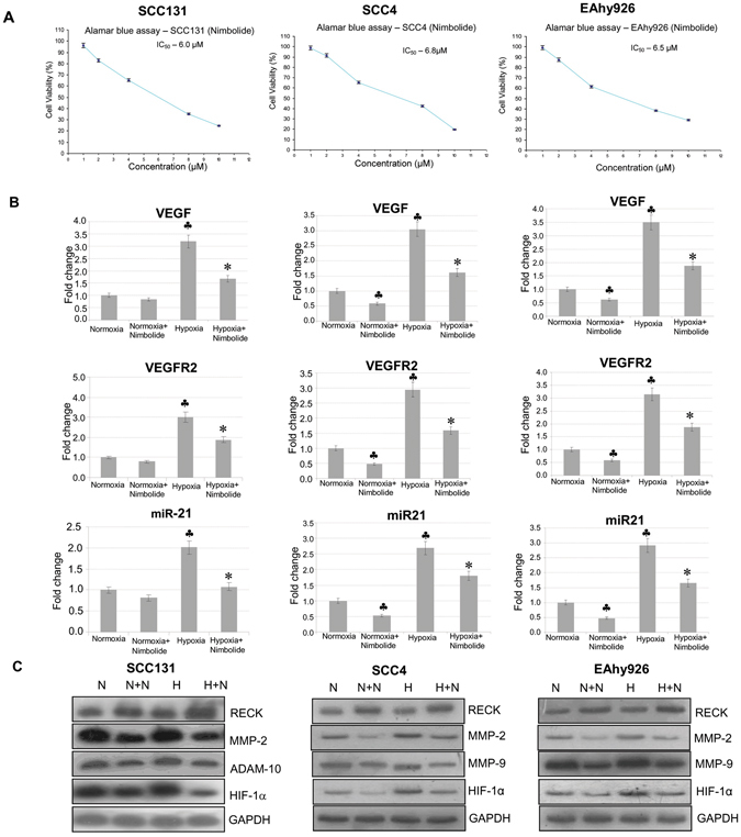 Nimbolide activates RECK and inhibits pro-invasive and pro-angiogenic molecules in a cellular context. ( A ) IC 50 value for nimbolide in SCC131, SCC4 and EAhy926 cells (Alamar Blue assay). ( B ) Transcript expression level of VEGF, VEGFR2, and miR-21 by quantitative RT-PCR in SCC131, SCC4 and EAhy926 cell lines. Data are the mean ± SD of three independent experiments (N = 3). ♣ p