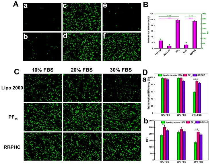 Transfection efficiencies of various complexes in HCT 116 cells at 24 h. (A) Comparison of various complexes in serum-free medium, PEI 1.8K/pGFP (a), PEI 25K/pGFP (b), PF 33 /pGFP at mass ratio of 5:1 (c), 10:1(d), HAC/pGFP (e), and RRPHC/pGFP (f). (B) Quantitative analysis of transfection efficiency in serum-free medium by flow cytometry. (C) Comparison of PF 33 /pGFP (PF 33 ), RRPHC/pGFP (RRPHC) and Lipofectamine 2000/pGFP (Lipo 2000) in medium containing 10% - 30% serum. (D) Quantitative analysis of transfection efficiency in medium containing 10% - 30% serum by flow cytometry. *p