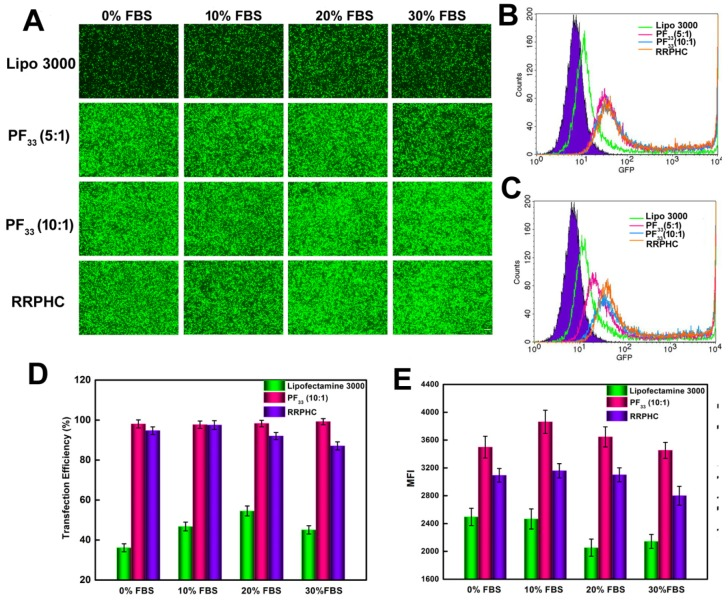 Comparison of the transfection efficiency of PF 33 /pGFP (PF 33 ), RRPHC/pGFP (RRPHC) and Lipofectamine 3000/pGFP (Lipo 3000) in medium containing 0% - 30% serum in HCT 116 cell. (A) Fluorescence microscopy images. (B) Analysis of transfection efficiency in serum-free medium by flow cytometry. (C) Analysis of the transfection efficiency in medium containing 30% serum by flow cytometry. (D, E) Quantitative analysis of GFP-positive cells (%) and Mean Fluorescence Intensity (MFI) by flow cytometry. pGFP indicates GFP pDNA. The scale bar indicates 200 μm.