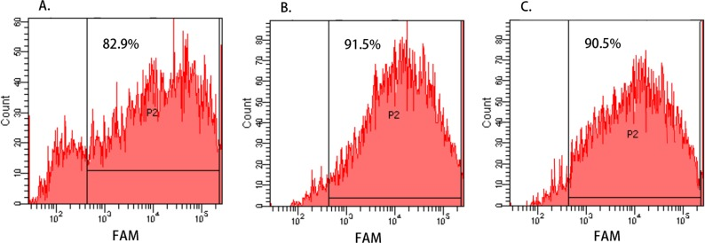 """Cell transfection efficiency evaluated by Flow Cytometry. (A–C) show the transfection efficiency of FAM-CR teams of Hep-2, M2e, and TU212 cell line, respectively, and the percentages of FAM-positive cells (represented by """"P2"""") were identified by flow cytometry. The transfection efficiency of Hep-2, M2e, and TU212 cell lines were 82.9%, 91.5% and 90.5%, respectively, and it was indicated that hsa-miR-138-2-3p and nonsense oligonucleotides were successfully transfected into the laryngeal CSCs with high efficiency."""