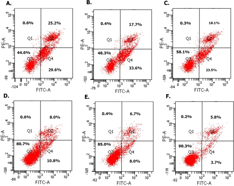 Overexpressed hsa-miR-138-2-3p induced cell apoptosis after radiation by flow cytometry. (A) and (C) show the cell apoptosis analysis of 100nM-TR and 100nMN-CR of Hep-2 cell line after radiation, respectively; (B) and (E) show the cell apoptosis analysis of 100nM-TR and 100nMN-CR of M2e cell line after radiation, respectively; (C) and (F) show the cell apoptosis analysis of 100nM-TR and 100nMN-CR of TU212 cell line after radiation, respectively. The vertical and horizontal axis stand for PI positive area and FITC positive area, respectively. Identified by flow cytometry, cells were divided into four sections: Q1: Annexin V-FITC-PI+, was representative of mechanical error; Q2: Annexin V-FITC+ PI+, was representative of late apoptosis or necrosis cells; Q3: Annexin V-FITC- PI-, was representative of living cells; Q4: Annexin V-FITC+ PI-, was representative of early apoptosis cells. (A–C) were shown the proportion of early apoptosis (29.6%, 33.6%, 23.5%) and late apoptosis (25.2%, 17.7%, 18.1%) of Hep-2, M2e, and TU212 CSCs induced by transfection of 100nM hsa-miR-138-2-3p were larger than that of induction by transfection of 100nM nonsense oligonucleotides ((D) early apoptosis of Hep-2 CSCs was 10.8%; (E) early apoptosis of M2e CSCs was 8.0%; (F) early apoptosis of TU212 CSCs was 3.7%; (D) late apoptosis of Hep-2 CSCs was 8.0%; (E) late apoptosis of M2e CSCs was 6.7%; (F) late apoptosis of TU212 CSCs was 5.8%), respectively after radiation.