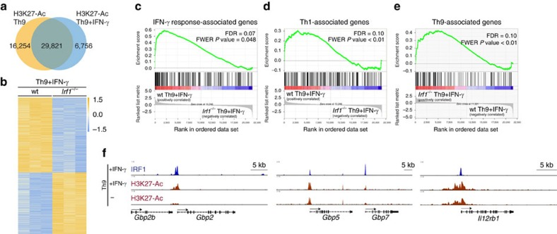 The IFN-γ/IRF1 pathway upregulates IFN/Th1-associated genes in Th9 cells. ( a ) ChIP-Seq analyses of Th9 cells with or without IFN-γ treatment. Cells were crosslinked with formaldehyde and immunoprecipitated with anti-H3K27-Ac antibodies. Massive parallel sequencing of immunoprecipitated DNA was performed. Numbers in the Venn diagram represent H3K27-Ac peaks. ( b ) Naive CD4 + T cells isolated from WT and Irf1 −/− mice were cultured under Th9 conditions in the presence of IFN-γ. Total RNA was purified from the cells and RNA-Seq was performed (three independent biological samples). Heatmap shows colour-coded z -scored fragments per kilobase of exon per million fragments mapped ( P