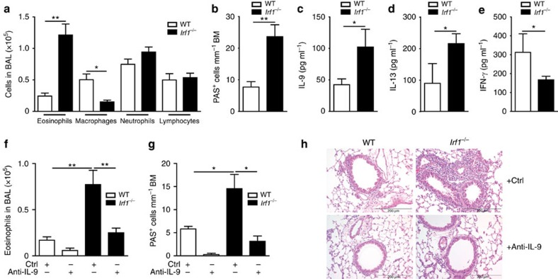 The IFN-γ/IRF1 pathway restricts Th9-dependent allergic airway inflammation. WT or Irf1 −/− Th9 cells treated with IFN-γ were adoptively transferred into Rag2 −/− mice, which were then challenged with nebulized OVA in the absence or presence of IL-9-neutralizing monoclonal antibodies (anti-IL-9) or control rat IgG (Ctrl) antibodies as outlined in Supplementary Fig. 6 . ( a , b , f , g ) Cell numbers in the BAL fluid are displayed. ( b , g ) Numbers of mucus-producing goblet cells evaluated by periodic acid-Schiff staining. ( c – e ) Lung cells were stimulated with 2 mM OVA 323–339 for 3 days. IL-9, IL-13 and IFN-γ production was determined in supernatants by ELISA. ( h ) Tissue inflammation was evaluated with haematoxylin and eosin staining, original magnification × 100. ( a – g ) Data are shown as the mean±s.e.m. of 10–15 mice combining two independent experiments. ( a – h ) The experiments were repeated four times with consistent results. * P