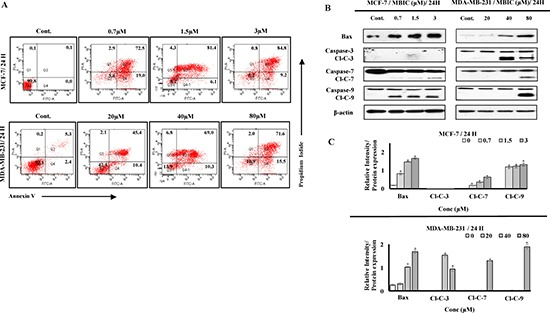 """MBIC induces caspase-dependent apoptosis ( A ) Two-dimensional forward and side scatter plots of FITC-conjugated Annexin V vs PI were generated using FACS technology when cells were treated with various concentrations (0.7, 1.5 and 3 μM against MCF-7; 20, 40 and 80 μM against MDA-MB-231) of MBIC for 24 h. Representative figure shows viable cells accumulation (Q3) vs early apoptotic (Q4), late apoptotic (Q2) and necrotic cells (Q1). ( B ) MCF-7 and MDA-MB-231 cells were treated with various concentrations of MBIC (0.7, 1.5 and 3 μM against MCF-7; 20, 40 and 80 μM against MDA-MB-231 cells) before measuring protein level of Bax and cleaved caspases-3/7/9 (Cl-C-3/7/9) with Western blot analysis. β-actin was used as loading control. ( C ) The relative intensity of each protein was normalized with β-actin. Data were results of three independent experiments with mean ± SD. All the treatment groups were compared with control.""""*"""" indicates statistically significant at P"""