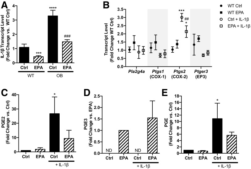 IL-1β expression is correlated with Ptgs2 expression and PGE 2 production in BTBR-Ob islets and can promote PGE 2 /PGE 3 production from BTBR-WT islets. A: BTBR-WT and BTBR-Ob islets were incubated with BSA control (Ctrl) or 100 μmol/L EPA for 48 h, and islets were then snap frozen for gene expression analysis. Data were compared by one-way ANOVA with a Tukey posttest. N = 4 to 5; *** P