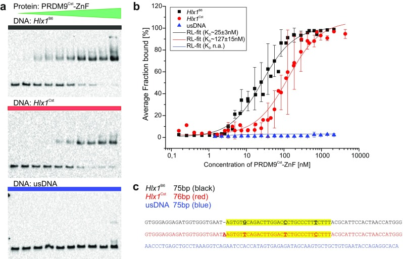 Binding affinity of PRDM9 to DNA in solution assessed with an EMSA titration assay. a Increasing concentrations of PRDM9 Cst -ZnF (0.16–4300 nM) were incubated with 3 nM of different biotinylated target DNAs ( Hlx1 B6 _75bp shown in black , Hlx1 Cst _76bp in red , and usDNA_75bp in blue , respectively) for ∼90 h, containing increasing concentrations of polydIdC (0.00035–9.39 ng/μl) and 0.03% sarcosyl ( N -lauroylsarcosine). Shown is a representative EMSA for Hlx1 B6 ( top ), Hlx1 Cst ( middle ), and usDNA ( bottom ) of triplicate ( Hlx1 ) or duplicate (usDNA) measurements. The average percent of the PRDM9-DNA complexes (% fraction bound) was calculated as the ratio of pixel intensities of the shifted band to the sum of free and bound DNA. b The average fraction bound of two (usDNA) or three ( Hlx1 B6 and Hlx1 Cst ) independent experiments was plotted against the PRDM9 concentration in a semi-logarithmic graph and the equilibrium dissociation constant ( K D ) was derived using a function that describes receptor-ligand binding in solution in dependence of the concentration of the labeled compound (see Supplementary_Methods). The error bars represent the standard deviation of two or three independent experiments. c Shown is one strand of the DNA sequences tested: Hlx1 B6 , Hlx1 Cst , and usDNA in black , red , and blue , respectively. All DNA sequences are shown in 5′–3′ direction. The specific target site of the PRDM9 Cst -ZnF array in the Hlx1 hotspots is highlighted in yellow . The polymorphisms between Hlx1 B6 and Hlx1 Cst are highlighted as bold , underlined letters