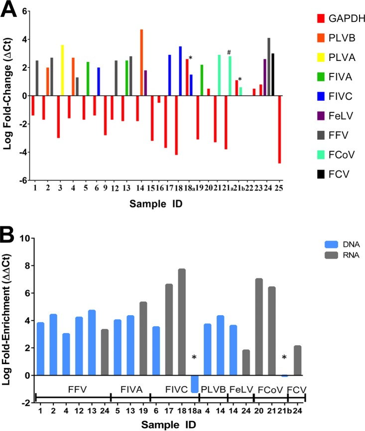 (A) Targeted genome capture results in the enrichment and depletion of pathogen and host nucleic acids, respectively. RT-PCR was performed pre- and postcapture for feline genomic <t>DNA/cDNA</t> (GAPDH) and individual pathogens pre- and postcapture. Two unenriched samples (*) demonstrated an increase of ≥1-fold in the relative abundance of the host GAPDH gene, compared to all of the enriched samples tested, in which GAPDH either decreased or remained approximately the same. One sample (#) was enriched with only half of the recommended capture probes but still demonstrated a depletion of host nucleic acids and an increase in pathogen nucleic acids. All pathogen nucleic acids measured increased in relative abundance postenrichment. Pathogen and host nucleic acids were measured only in samples with sufficient volume remaining before and after sequencing to conduct RT-PCRs. (B) Pathogen nucleic acids were enriched from 58-fold to 56 million-fold relative to host nucleic acids. The relative abundance of pathogen DNA did not increase in the two unenriched samples (*), but the corresponding paired, enriched pathogens increased over 1 million-fold. Samples in this figure are grouped by pathogen type: FFV, feline foamy virus; FIVA, feline immunodeficiency virus clade A; FIVC, feline immunodeficiency virus clade C; PLVB, puma lentivirus clade B; FeLV, feline leukemia virus; FCoV, feline corona virus; FCV, feline calicivirus.