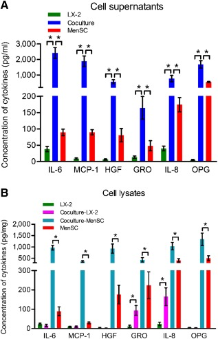 The concentrations of IL‐6, <t>MCP‐1,</t> <t>HGF,</t> GRO, IL‐8, and OPG in culture supernatants (A) and cell lysates (B) determined by enzyme‐linked immunosorbent assay. Data represent the means ± SDs ( n = 4). ∗, p