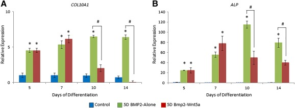 Wnt5a suppressed BMP‐2‐induced markers of chondrocyte hypertrophy. Comparative expression of mature chondrocyte markers of hypertrophy COL10A1 (A) and ALP (B) in H9‐derived mesenchymal stem cells (MSCs) cultured for 5 days in 100 ng/ml BMP‐2, followed by up to 9 days of no growth factor treatment (5D BMP2‐Alone) or sequential treatment with 50 ng/ml Wnt5a (5D BMP2‐Wnt5a). Values greater than 1.0 represent a fold‐change increase in gene expression and less than 1.0 indicate a relative decrease in expression in comparison with the undifferentiated H9‐derived MSCs (day 0). ∗, p
