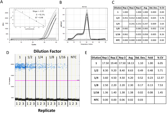 Assessment of primer efficiency, linear dynamic range and precision of ddPCR and qPCR platforms for low target concentration. Five reactions of 45 µL were prepared in triplicate from 1/2 serial dilutions of synthetic DNA in nuclease-free water with primers and ddPCR EvaGreen supermix. Each reaction mix was split for quantification in qPCR and ddPCR (20 µL for each platform). Amplification traces ( A ), standard curve (A inset), melt analysis ( B ) and tabulated relative fold difference (ΔCq) results ( C ) for qPCR. The ddPCR amplitude plot ( D ) and tabulated absolute concentration data ( E ). NTC: No Template Control; Dilution: Dilution factor of DNA samples; Rep: Replicate number; Avg: Average of the replicates; Std. Dev.: Standard Deviation between the replicates; % CV: % Coefficient of Variance (Std. Dev./Avg*100).