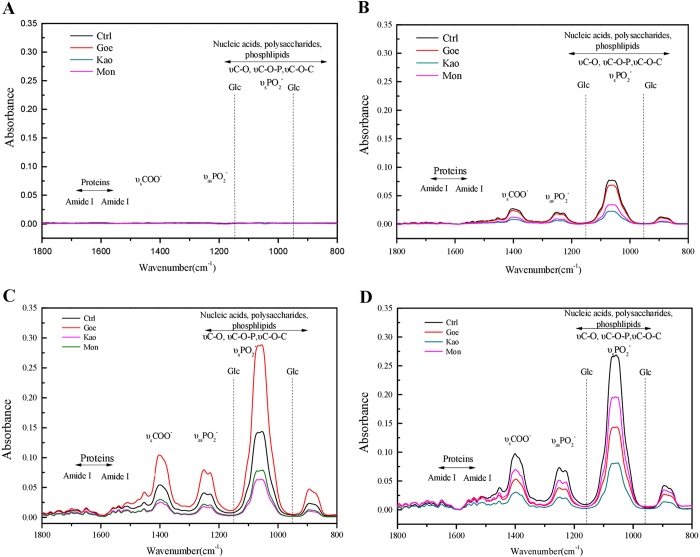 ATR-FTIR assays of the biofilm formation at 24 ( a ), 36 ( b ), 48 ( c ), and 60 h ( d ). At each time point, the absorbance spectra were given for control (Ctrl), goethite (Goe), montmorillonite (Mon), and kaolinite (Kao) seperatedly, as indicated in figure legends. Representive peaks (nucleic acids, polysaccharides, proteins, etc.) were labeled on the top of curves, respectively